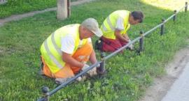 ZDM stawia płotki chroniące zieleń, a kierowcy je systematycznie dewastują