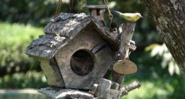 Partycypacyjne budki dla ptaków
